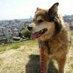 2015年9月27日午前8時、愛犬との別れ。